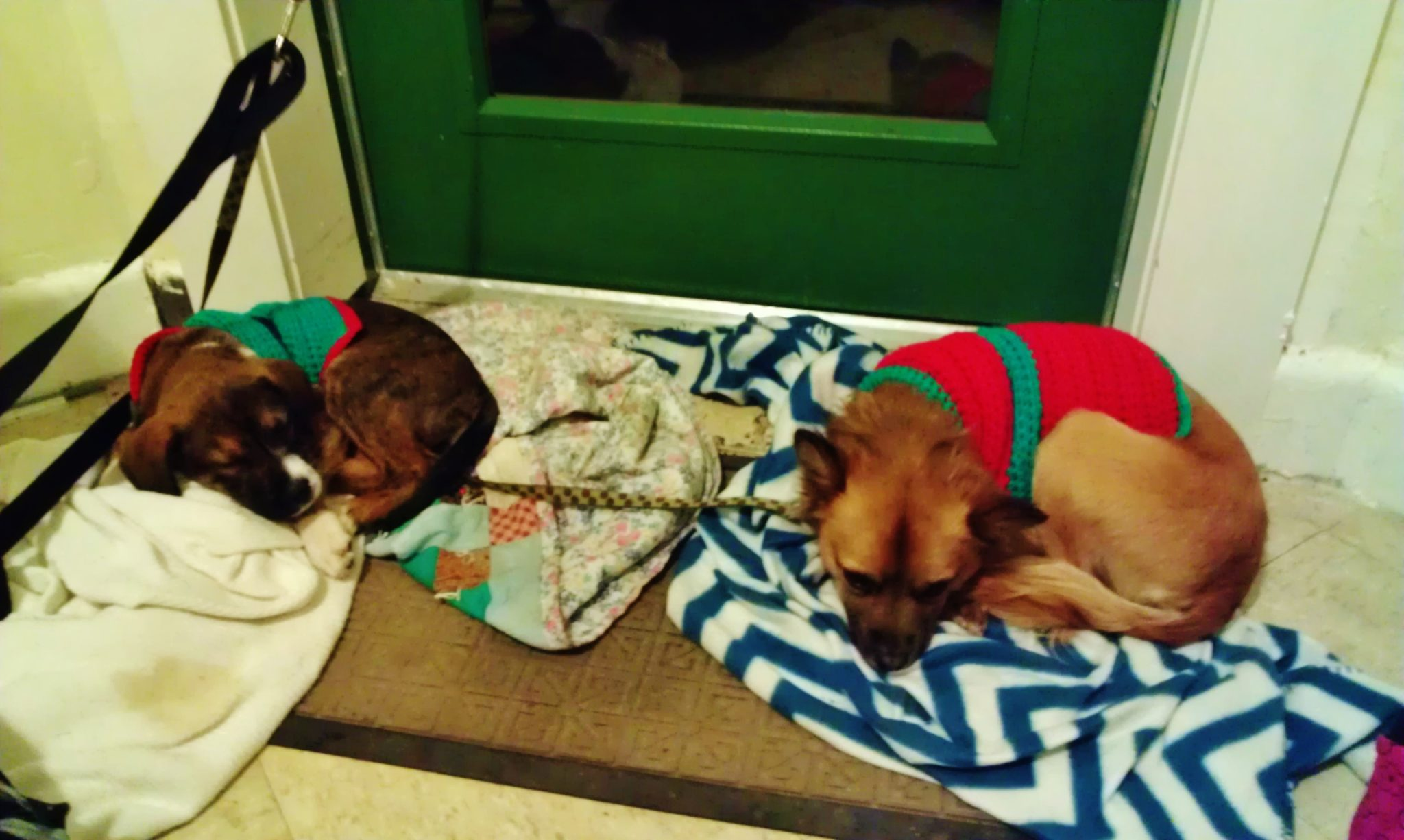 Two Dogs At Our Emergency Warming Shelters Wearing Hand Made Dog Sweaters That Were Sent To Us After A News Story.